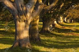 Badbury Rings